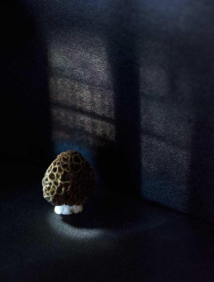 CHERRYSTONE-Photographe-Culinaire_morille mise en scène fenêtre