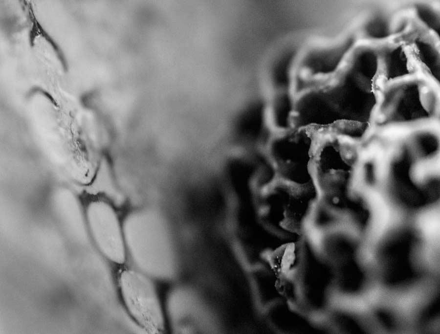 CHERRYSTONE-Photographe-Culinaire_MORILLE macrophotographie