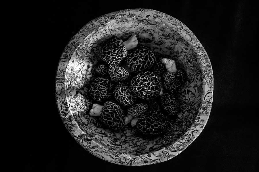 CHERRYSTONE-Photographe-Culinaire_morilles des bois