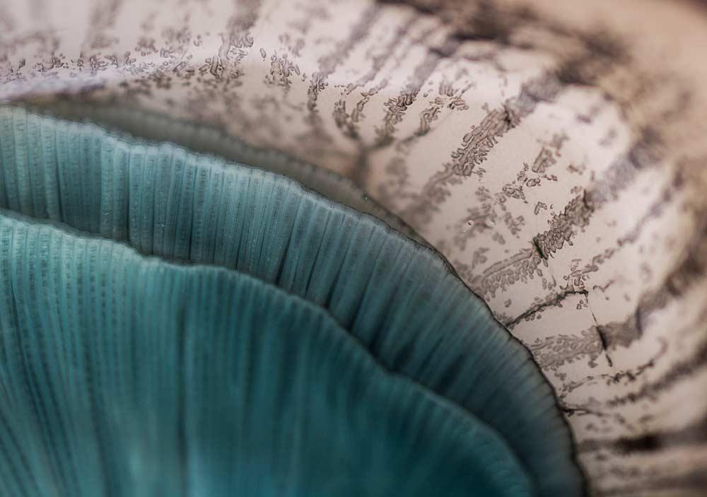 CHERRYSTONE Photographe culinaire _ huître bleue Oléron intimiste